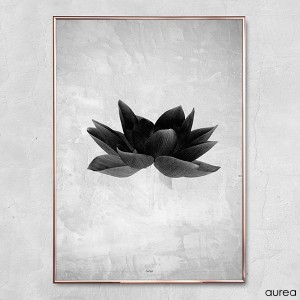 plakat_aurea_greyish_flower3