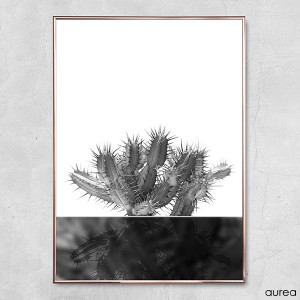 plakat_aurea_kaktus_no2_3